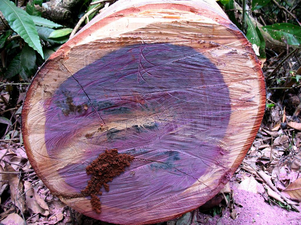 Фото проемов деревянных беседок