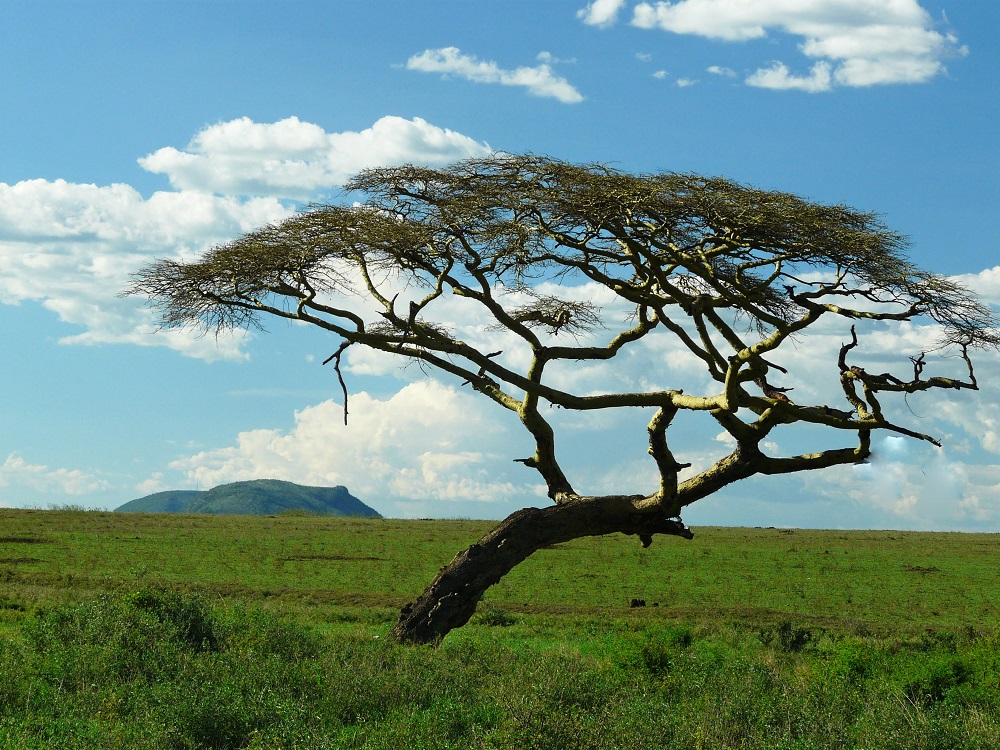 рядом вами дерево ситтим фото склеп, сути
